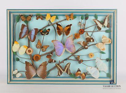 Cadre rectangulaire contenant seize papillons...