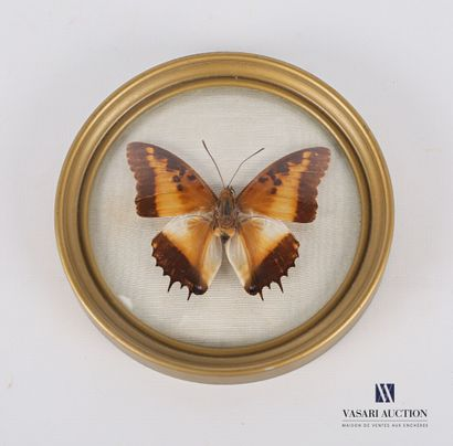 Cadre circulaire bombé contenant un papillon....