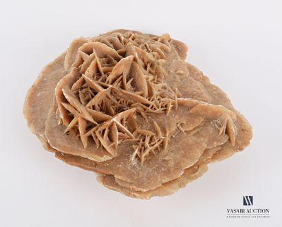 Rose des sables  Haut. : 8 cm - Larg. : 20...