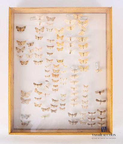 Boite entomologique contenant quatre vingt...