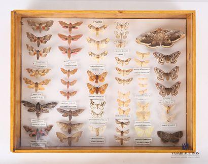 Boite entomologique contenant cinquante et...