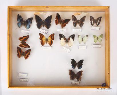 Boite entomologique contenant treize lépidoptères...