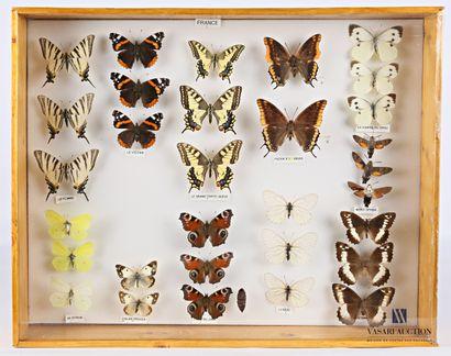 Boite entomologique contenant trente et un...