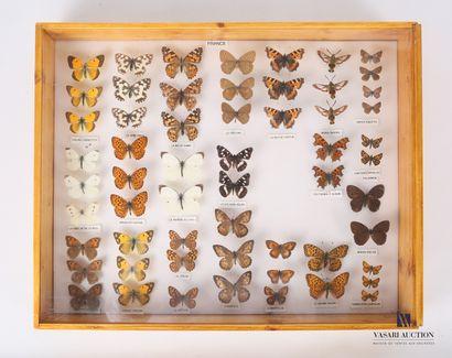 Boite entomologique contenant cinquante-huit...