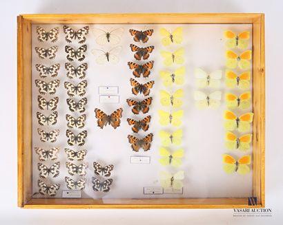 Boite entomologique contenant quarante-neuf...