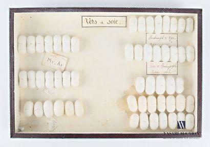 Boite entomologique présentant cinquante...