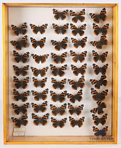 Boite entomologique contenant quarante-quatre...