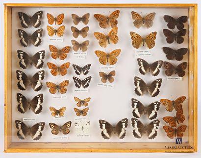 Boite entomologique contenant trente neuf...