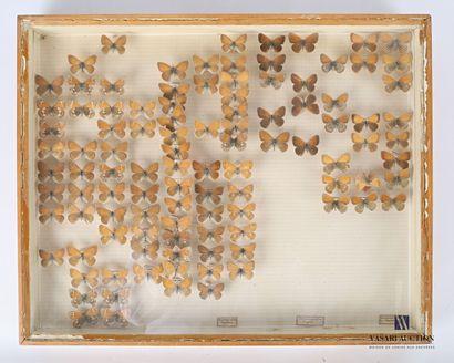 Boite entomologique contenant cent cinq lepidoptères...