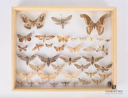 Boite entomologique contenant trente-neuf...