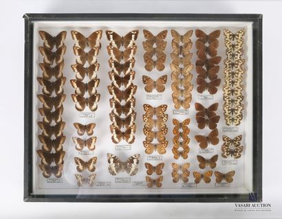Boite entomologique contenant soixante quatorze...