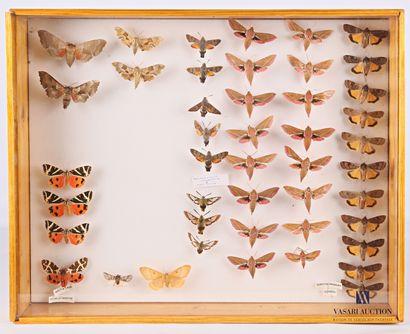 Boite entomologique contenant quarante-cinq...