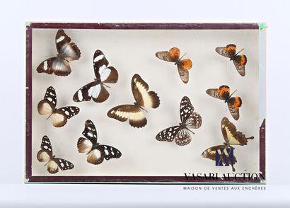 Boîte entomologique vitrée contenant onze...