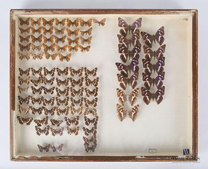 Boite entomologique contenant quatre-vingt...