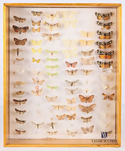 Boite entomologique contenant soixante dix...
