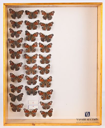 Boite entomologique contenant vingt neuf...