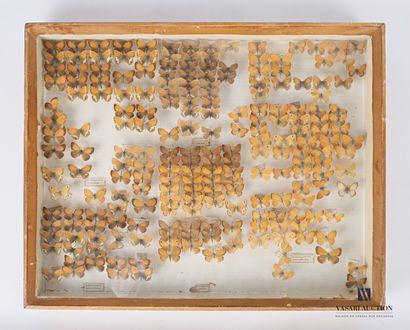 Bote entomologique contenant deux cents dix...