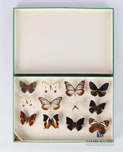 Boite entomologique contenant douze lépidoptères...