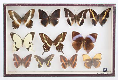 Boite entomologique contenant onze lépidoptères...