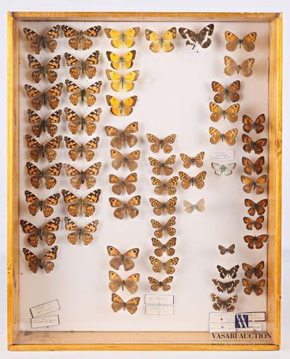 Boite entomologique contenant soixante lepidoptères...