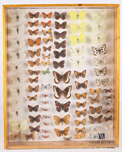 Boite entomologique contenant quatre-vingt-cinq...