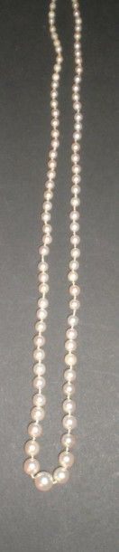 Collier de perles du Japon en chute  Fermoir...
