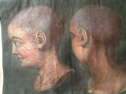 DUVERNEY et GAUTIER d'AGOTY.  Essai d'anatomie en tableaux imprimés qui représentent...