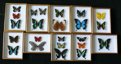 Lot de 10 cadres dorés de papillons très...