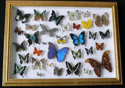 «Envol» de papillons – présentation dans...