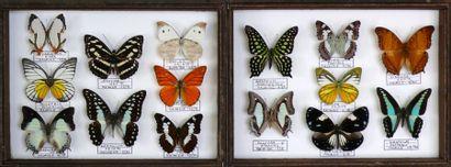 Lépidoptères indo-malais - deux petits coffrets...