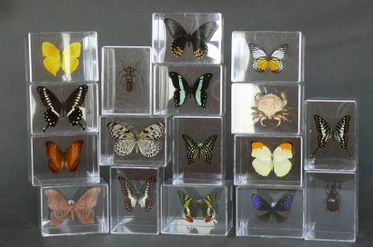Lot de 19 spécimens présentés en petits coffrets...