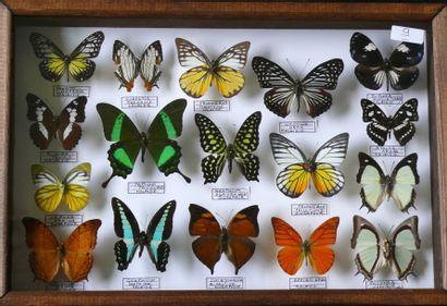 Lépidoptères de Malaisie et Singapour