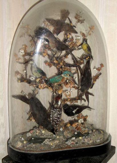Oiseaux sous cloche
