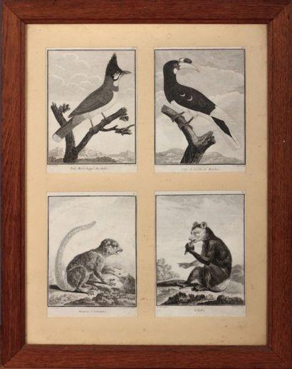 SONNERAT P (dessinateur) - J.J AVRIL &  DESMOULINS...
