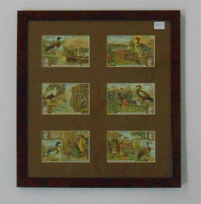 LIEBIG - OISEAUX & VOLATILES : Ensemble de 2 séries de 6 Chromos (V.et H.), 1905....