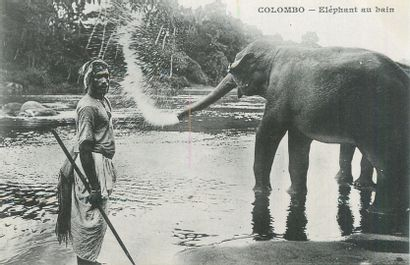 81 CARTES POSTALES LES INDES : Colombo-27cpa,...
