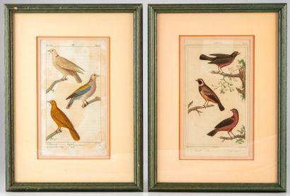 Paire de gravures ornithologiques issues...