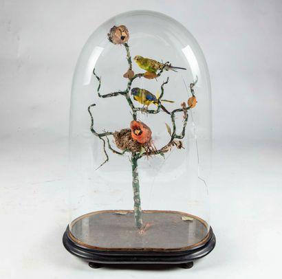 Globe naturaliste présentant des oiseaux...