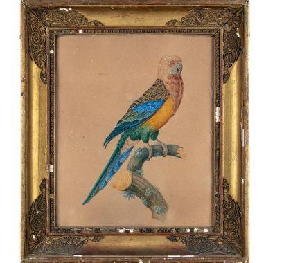 ÉCOLE FRANCAISE du XIXe Le perroquet sur...