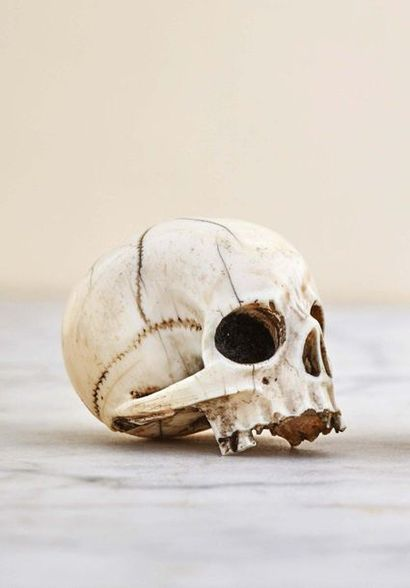 Important crâne en ivoire sculpté. Facture...