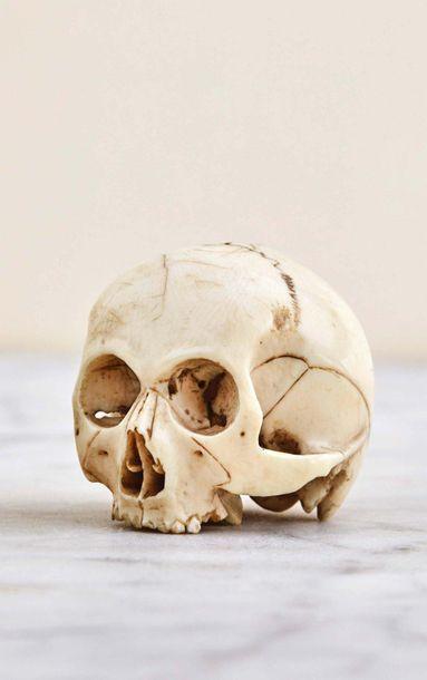 Important crâne en ivoire sculpté. France...