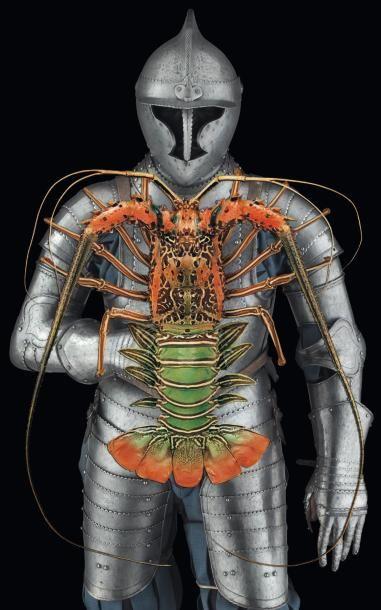 Langouste Palinurus sp. Spécimen exceptionnel. Taille: 45 cm