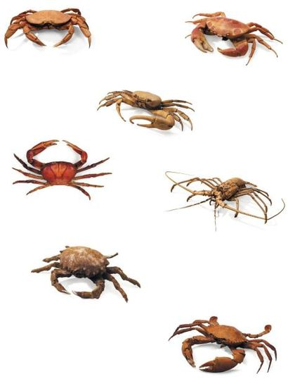 Lot de 7 exemplaires de Langouste et crabes