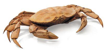 Grapsidae Envergure: 38 cm