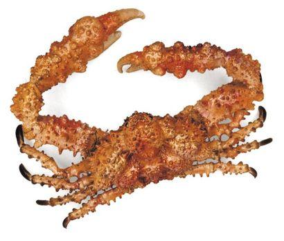 Crabe pierre Dromia sp. Envergure: 27 cm