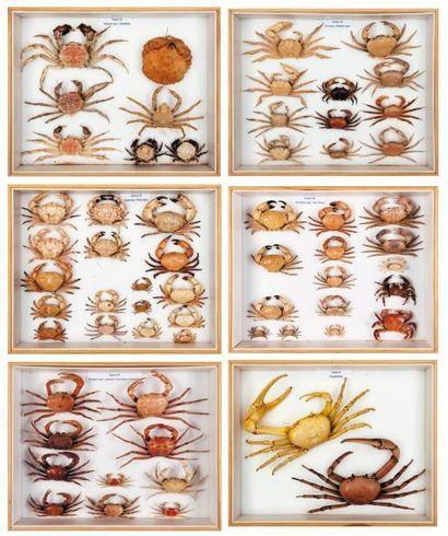 Lot de six boîtes: Crabes et divers en état...