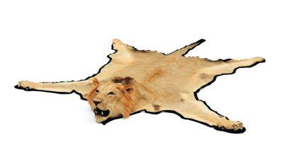 Peau de lion avec tête naturalisée H_303...
