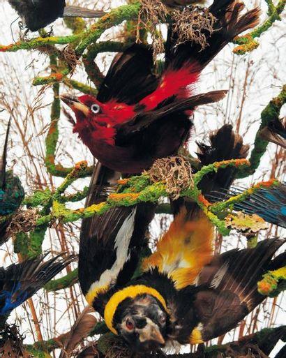 Globe Victorien comprenant de nombreuse espèces d'oiseaux sud-américaines, dont...