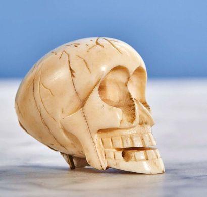 Lot composé de trois crânes : - Crâne en...