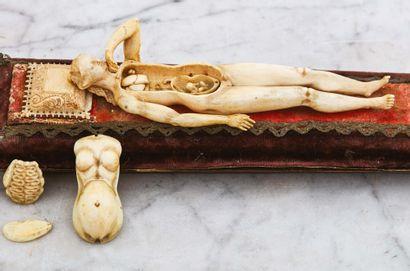 Mannequin anatomique d'une femme enceinte de jumeaux en ivoire sculpté avec traces...